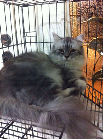 otganimalpets01: Cat relaxing in cage