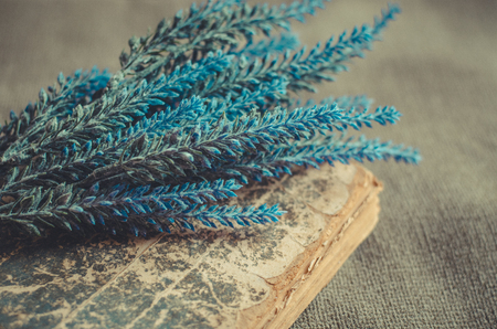 Bouquet of fresh blue lavender lies on the old book on rough background