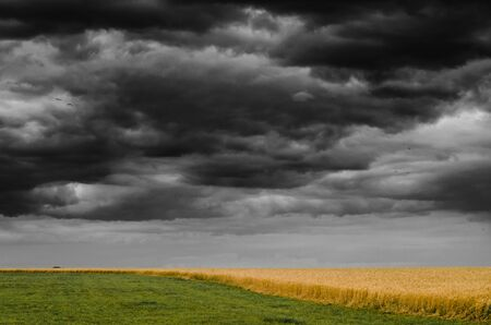Country landscape with yellow rye field under the gloomy sky. Seasonal natural view with the harvest