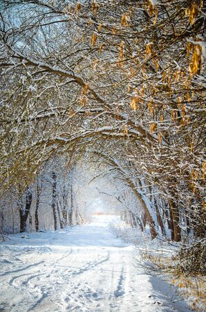 Snowy road through the winter tale forest on the sunny day. Vertical seasonal background Stok Fotoğraf