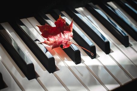 Red maple leaf lays on the piano keyboard on a sunny day. Concept of musical inspiration Stock Photo
