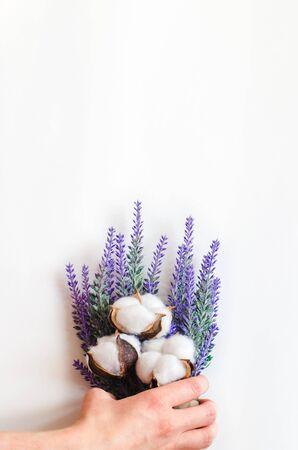 Hand holds a bouquet of lavender and cotton-plant on white background with copy space Reklamní fotografie