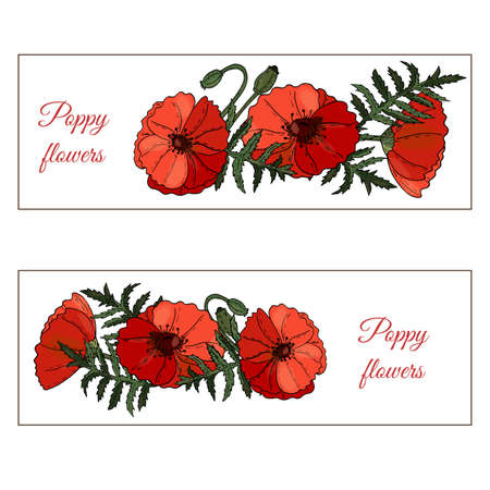 Floral banner with Poppy flowers, buds and leaves on white background. Botanical design of wedding invitation template, postcards, banners, posters, templates, seasonal sales. Illusztráció