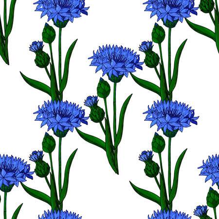 Kornblume nahtloser mit Blumenhintergrund lokalisiert auf dem Weiß. Vektorgrafiken. Botanisches Design mit blauer Kornblume.
