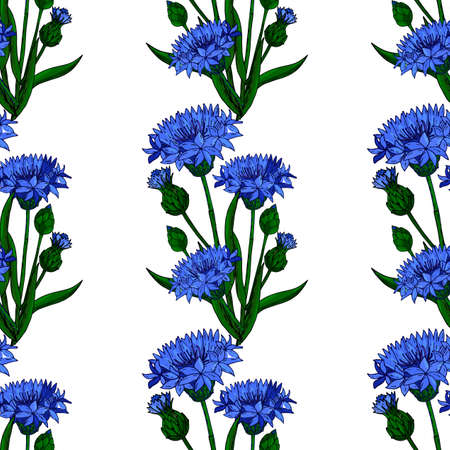 Cornflower floral seamless background isolated on the white. Vector artwork. Botanical design with blue cornflower.