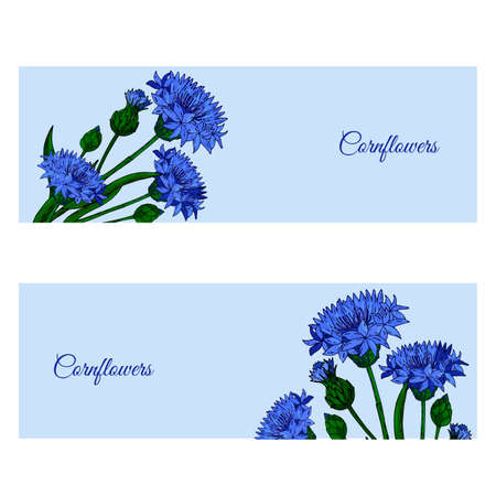 Floral banner with Cornflowers, buds and leaves. Botanical design with blue field Cornflower of wedding invitation template, postcards, banners, posters, templates, seasonal sales.