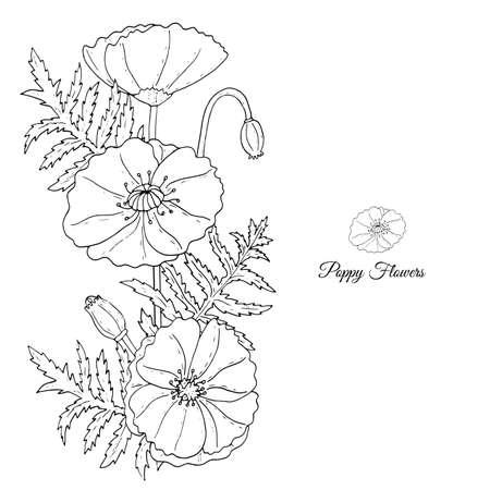 Tamplate floral avec ligne noire Fleurs de pavot, bourgeons et feuilles sur fond blanc. Conception botanique de pages à colorier, modèle d'invitation de mariage, cartes postales, bannières, affiches, modèles, ventes saisonnières, carte de mariée. Vecteurs