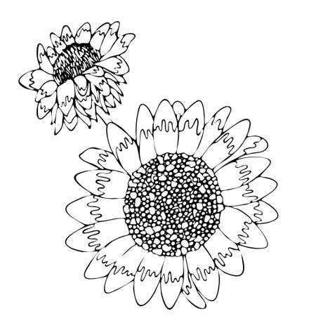 Floral coloring template with black line flower. Printable coloring book pages. Coloring sheets. Botanical design of wedding invitation, postcards, posters, templates, bridal card. Coloring pages.