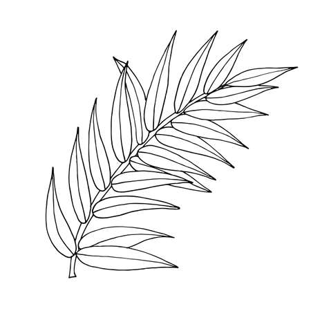 Vector palm tree leaf isolated on the white. Vector line art palm tree leaf. Çizim