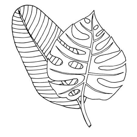 Vector monstera leaf isolated on white. Black line Monstera vector.