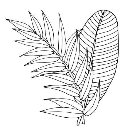 Vector banana leaf isolated on the white. Banana leaf line art vector. Illustration