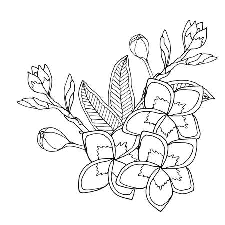 Plumerie or frangipany exotic flower isolated on white. Frangipany flower vector. Plumerie flower vector.