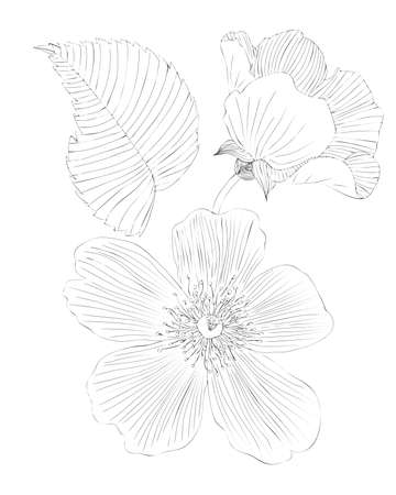 Flower black line contour for coloring book or page. Flower coloring. Çizim