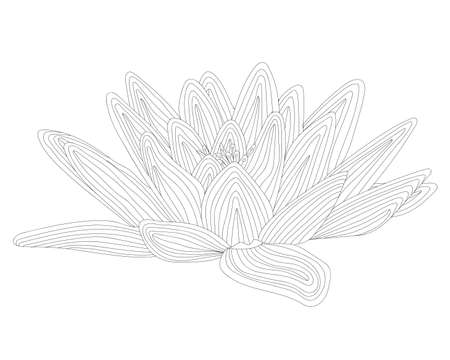 Black line exotic waterlily flower isolated on the white background. Waterlily coloring page or book.