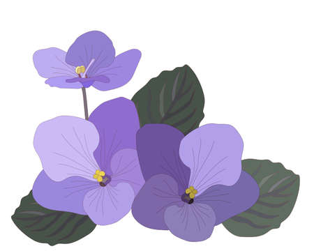 Colorful Violet flower isolated on the white background. Violet coloring page or book.