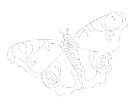Black line butterfly isolated on the white background. Butterfly coloring page or book.