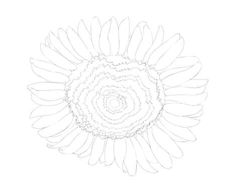 Black line sunflower flower isolated on the white background. Sunflower coloring page or book.