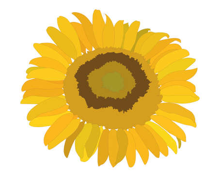 Colorful sunflower flower isolated on the white background. Sunflower coloring page or book. Çizim