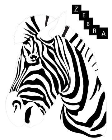 Zebra isolated on the white background. Cool zebra animal. Çizim