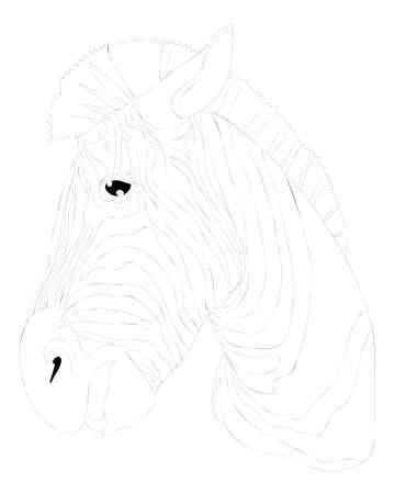 Zebra coloring book or page isolated. Black line zebra animal. Çizim