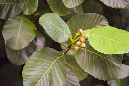 Rainforest trees and leaves. Green subtropical scenery.