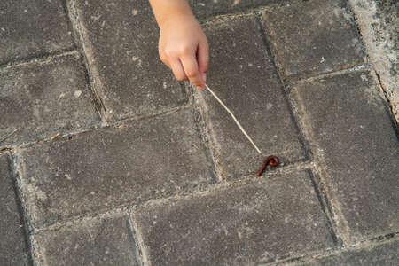 Millipede walking on ground.