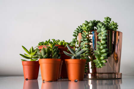 Succulents in different pots on the white background. Scandinavian hipster home decoration