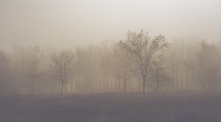 The mystic autumn forest is in fog  Toned  picture  photo