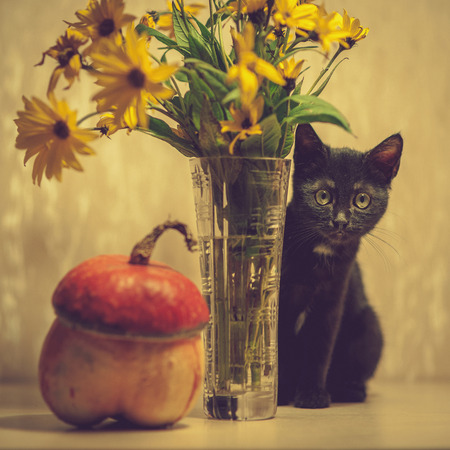 A black kitten peeks out from a vase with flowers. Pumpkin near a vase. photo