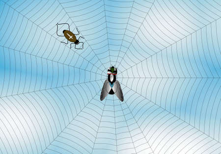 warned: Black spider and  fly with spiderweb on water  background. Stock Photo