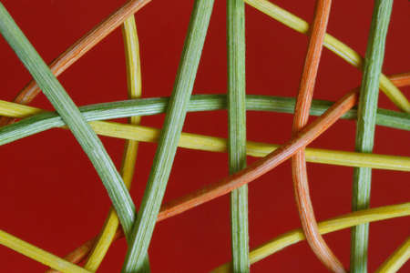 mixture: Tangle, macro photo mixture, red background with textured