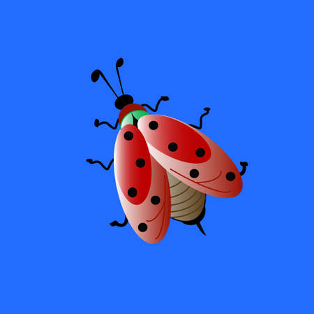 click beetle: colors ladybird,  blue background , version red