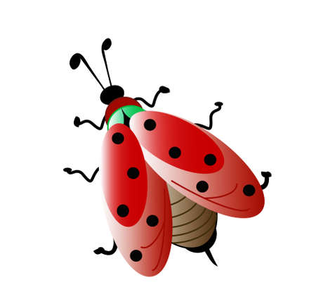 click beetle: colors lady bug, object white isolated Stock Photo