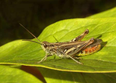 one grasshopper                  photo