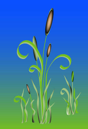 grass blades: Water weed plant, with natural background Cigars