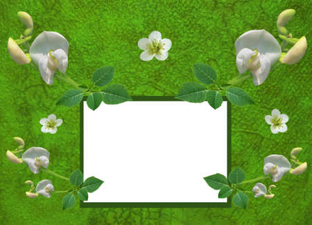 jonquil: Vintage green postcard with fresh flowers, textured background, white frame for text
