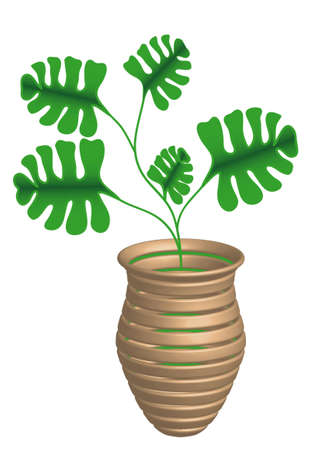 philodendron: Philodendron in a vase,  Illustration