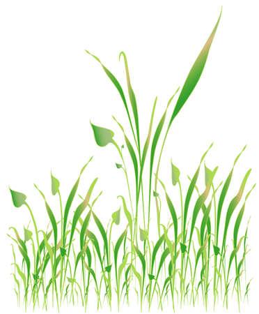 gramineous: Green grass