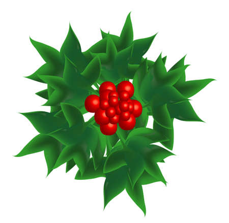 a sprig: Sprig of European holly, object isolated Illustration