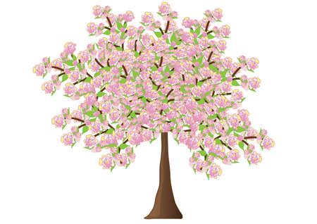 flowering: Spreading flowering tree Stock Photo