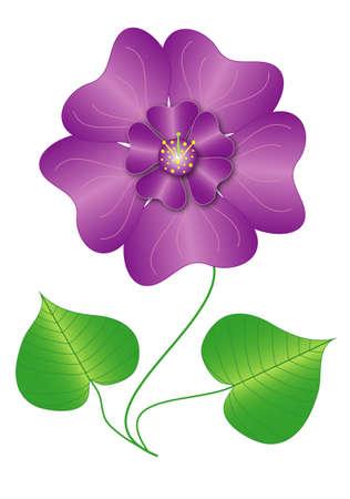 violet flower: Vector Illustration violet flower fragrance isolated Illustration