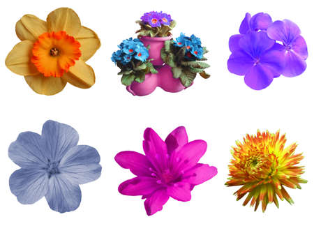blossomed: Set symbols vivid flowers object white isolated