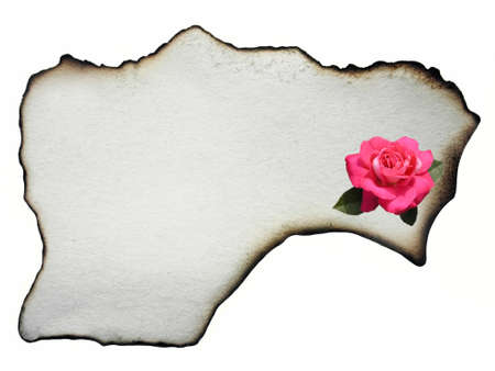 Ancient parchment witg flower rose.