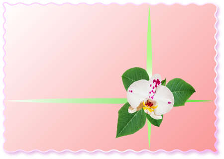 Congratulations card with orchid flower and place for your text.