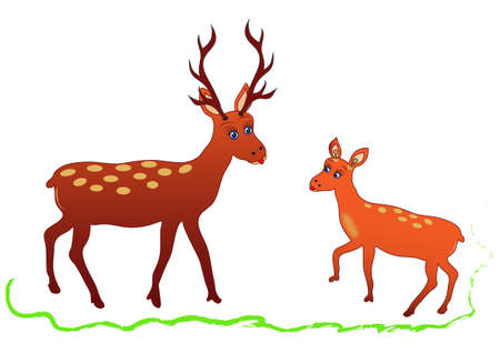 Illustration of deer with antlers and chick fawn. Vector.