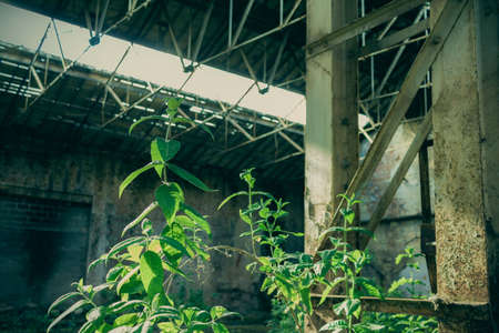 abandoned warehouse: Plants grow in an abandoned warehouse