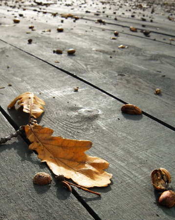planking: Fall of the leaf on stage of the city park Stock Photo
