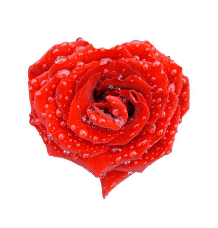 Red rose in the form of heart in drops over white
