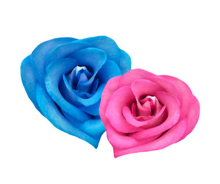 Red and blue roses in the form of hearts together Stock Photo