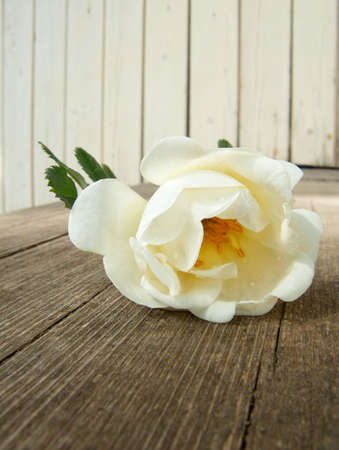 Rose on the wooden porch of cottage Stock Photo - 2989589